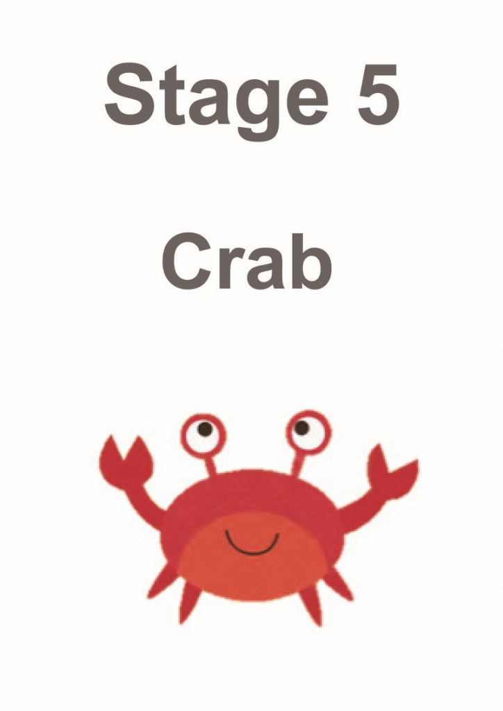 stage 5 crab